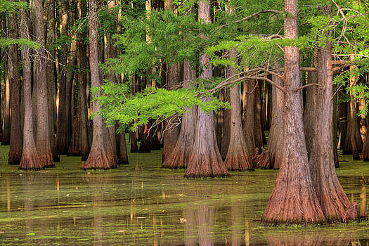 Inside The Bayou by Ester Rogers