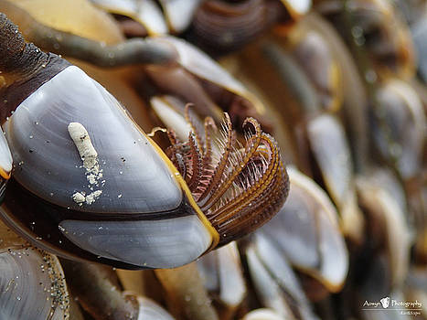 Insider Life of Goose Barnacle  by Stephanie McGuire