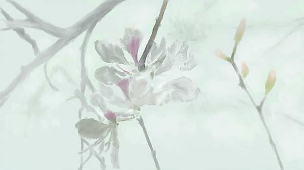 Inspiration flower  by Khajohnpan Sauychalad