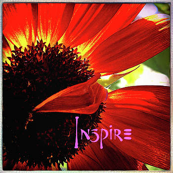 Inspire stylish, red orange daisy close-up  by Marcia Luce at Luceworks