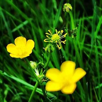 #instaprints #flowers by Jamie Brown