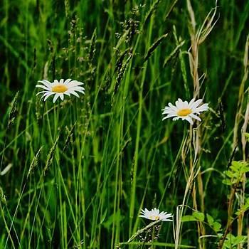#instaprints #igfame #flowerpower by Jamie Brown