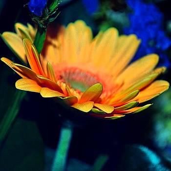 #instaprints #instahub #flowerpower by Jamie Brown