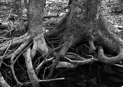 Intertwined by Nancy Killam