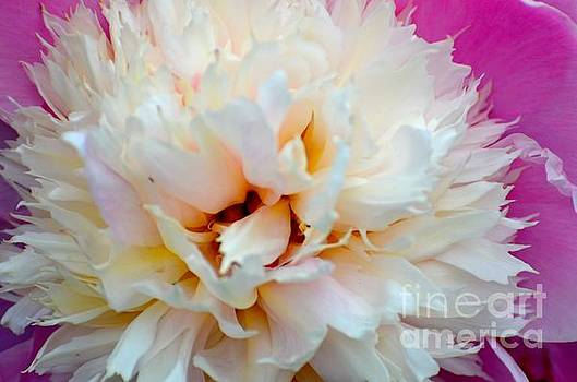 Into the Bloom by Stephanie  Bland