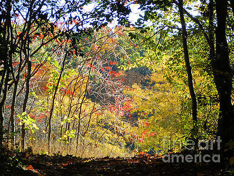 Into the Clearing by Vickie Johnson