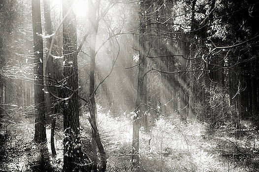 Into The Forest - No. 8 by Dorit Fuhg