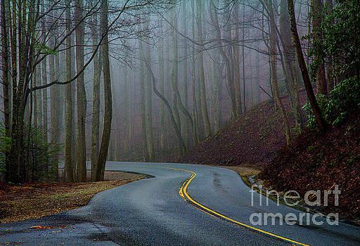 Into the Mist by Douglas Stucky