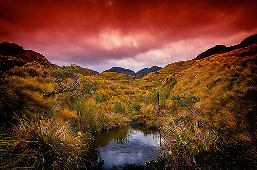 Into the Wild by Richard Espenant