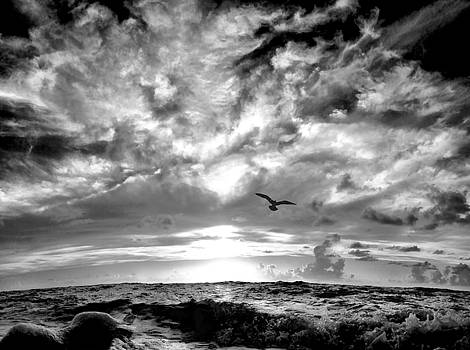 Into the wild sky. by Andrew Royston