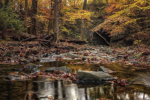 Into The Woods by Edward Kreis