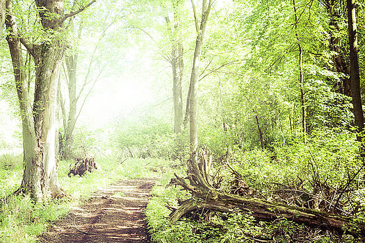 Into the Woods by Joel Witmeyer
