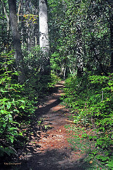 Kay Lovingood - Into the Woods