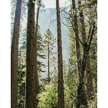 Into The Woods Of Yosemite!  #vsco by Shivendra Singh