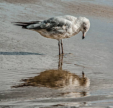 Introspective Gull by Jim Moore