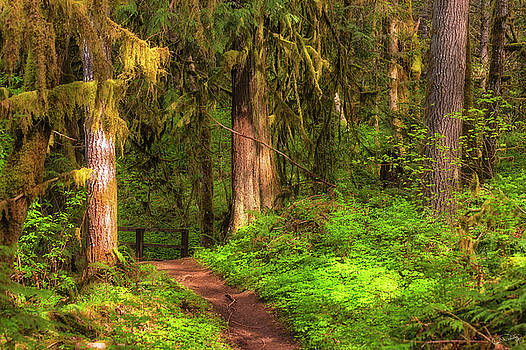 Inviting Forest Path by Dee Browning