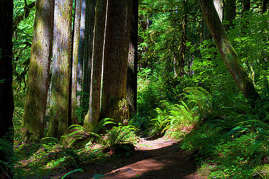 Inviting Hike by Dee Browning