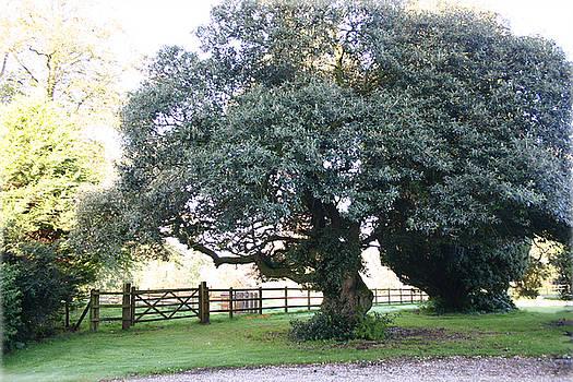Rick De Wolfe - Ireland Tree