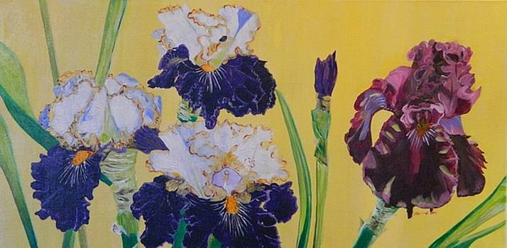 Iris Afternoon Delight by Pamela Trueblood