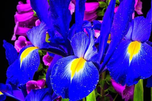 Iris And Foxglove by Garry Gay