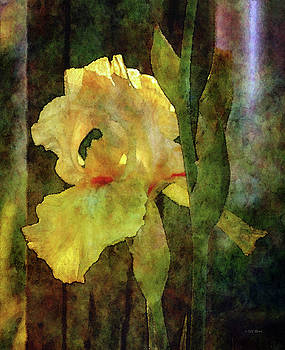 Iris and Post 6731 IDP_4 by Steven Ward