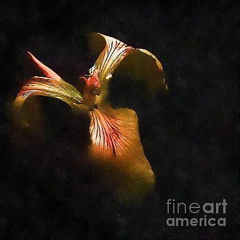 Iris Art by Andrea Kollo