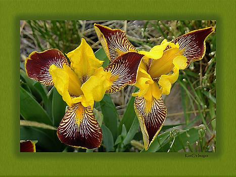 Kae Cheatham - Iris as Birds Captured