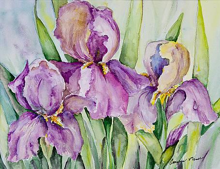 Iris Beauties by Carolyn Bell