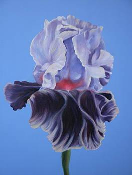 Iris by Betsy Cullen