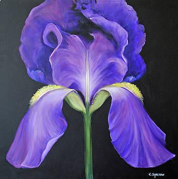 Carolyn Shireman - Iris