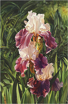 Iris by Cherie Sikking