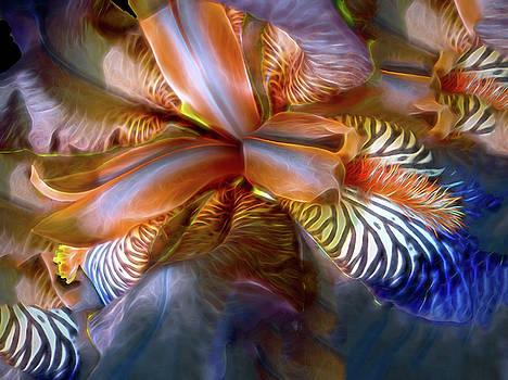Iris Dream by Lynda Lehmann