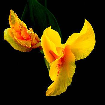 Iris by Farah Faizal