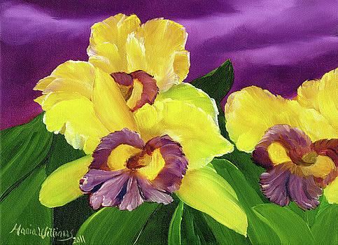 Iris Flowers by Maria Williams