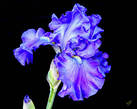 Iris Flowing by Rick Lawler