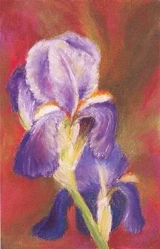 Iris From Mary by Teresa Kelly-Tagas