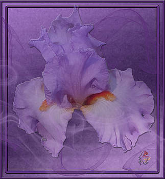 Iris From The Mists by Patricia Whitaker