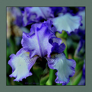 Iris/Germanica on edge by Kae Cheatham