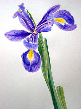 Iris II by Melanie Hunter