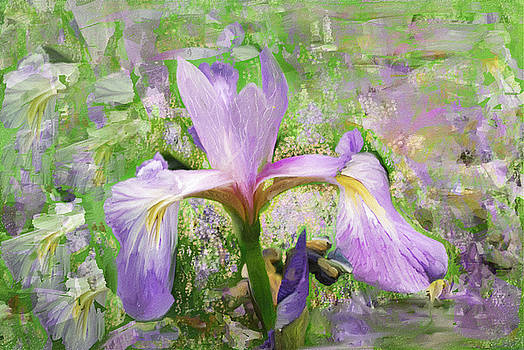 Iris illusion  by Don Wright