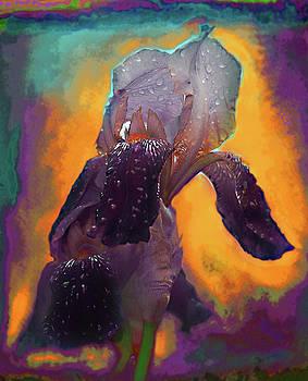 Iris in purple by Jeff Burgess