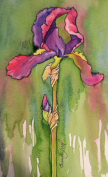 Iris, In Shades Of Violet by Brenda Jiral