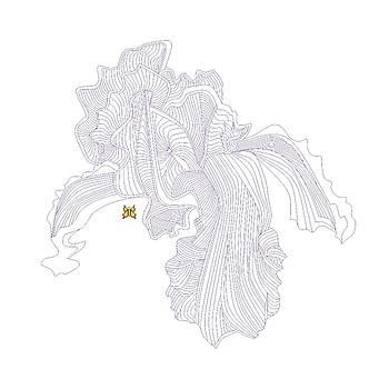 Iris Line Drawing by Anne Norskog