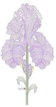 Iris Line Drawing Two by Anne Norskog