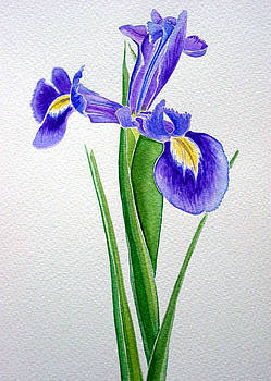 Iris by Melanie Hunter