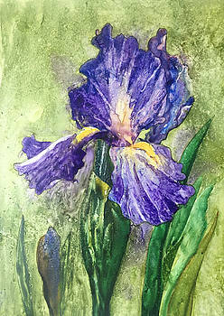 Iris on Yupo by Nancy Goldman