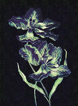 Iris by Orla Cahill