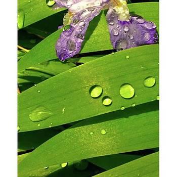 #iris #purple #gif_daily  edit Via by Lisa Pearlman