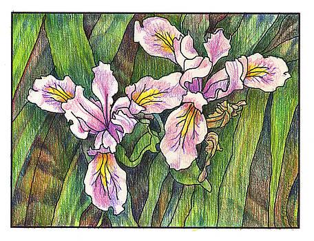 Iris by Rose Gauss