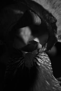 Michelle  BarlondSmith - Iris Shadow in Black and White